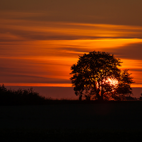 Sunrise through the trees by Allan Wallberg - Landscapes Sunsets & Sunrises ( red, sky, sweden sunrise, beautiful, hot, warmth, morning, sun,  )