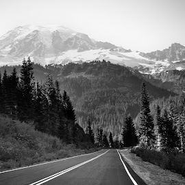 Road to Ranier by Erin Perkins-Watry - Landscapes Mountains & Hills ( mt. ranier, mountain, forest, road, landscape )