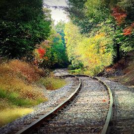 Train Tracks by Tricia Scott - Landscapes Travel ( autumn, foliage, trees, train, tracks )