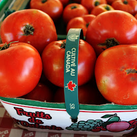 Organic Tomatoes for your fancy by Hannah Cohen - Nature Up Close Gardens & Produce ( home grown, green, fruite, ontario, bushel, tomatoe, country, picton, veggatables, red, farmer, farmer's market, county, sales, produce,  )