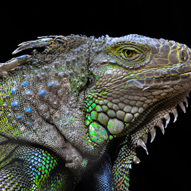 I'M NOT MONSTER by Gaz Makarov - Animals Reptiles (  )
