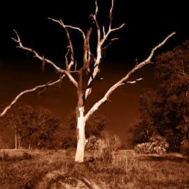 bones by David Ubach - Digital Art Places ( field, skull, tree, bones, dead )