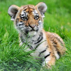 Zoo watch pic.jpg