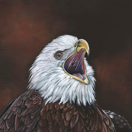 Acrylic on canvas from my eagle photo by Sandy Scott - Painting All Painting ( birds of prey, eagle, eagle painting., bald eagle, raptors, acrylic paining,  )