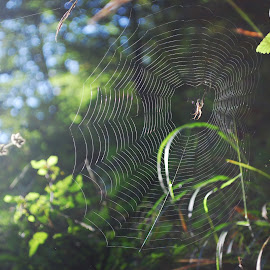 by Ivan Marjanovic - Nature Up Close Webs