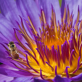 Too Close to the Fire   by Sue Matsunaga - Novices Only Macro