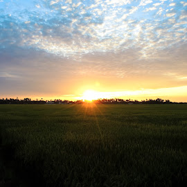 Sunset Paddy Field  by Safwan Fuad - Landscapes Prairies, Meadows & Fields