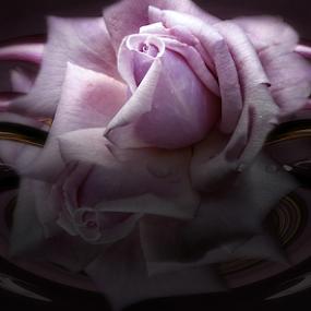 LIGHT by Carmen Velcic - Digital Art Abstract ( abstract, shadow, roses, flowers, light, digital )