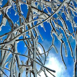 Frozen tree at Niagara Falls by Brock Willis - Landscapes Travel ( cool, water, love, sky, tree, blue, niagara falls, art, new york, like )