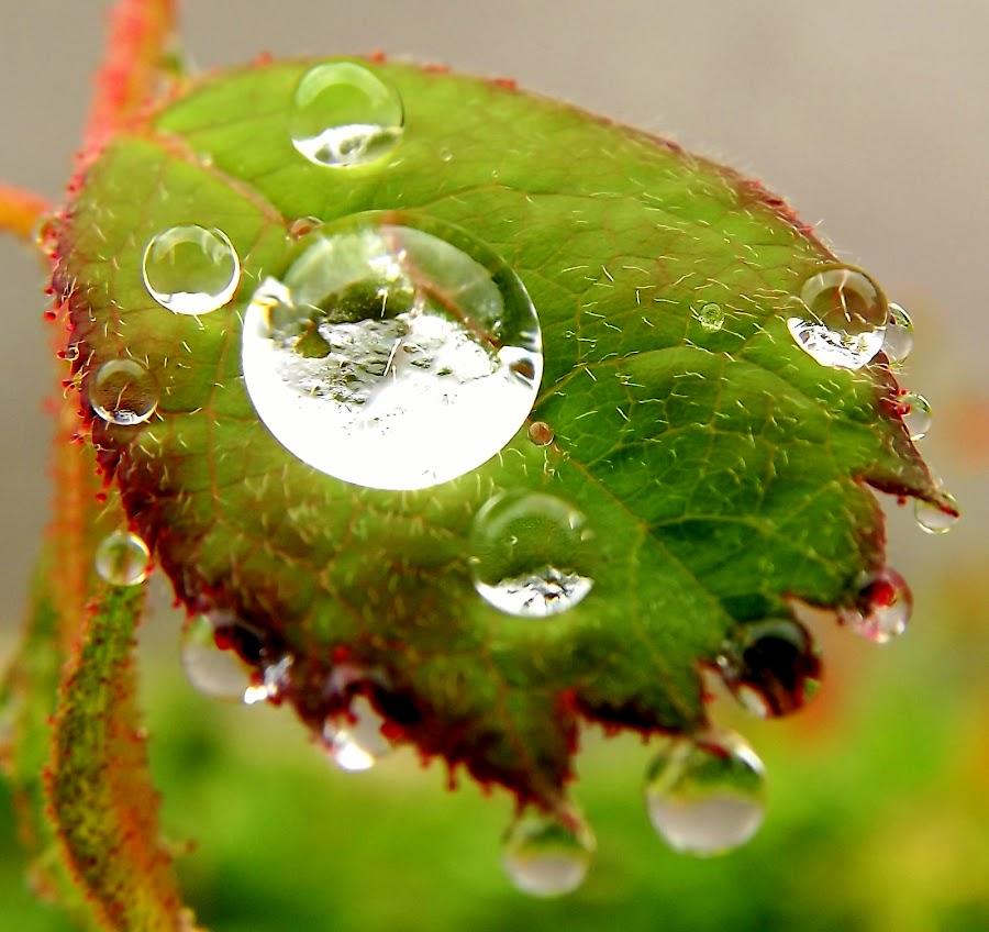 najveći by Jelena Puškarić - Nature Up Close Other Natural Objects (  )