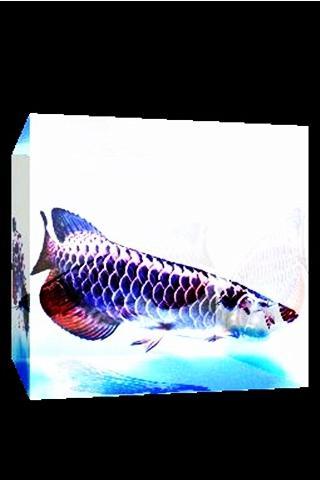 3D 幸運の魚