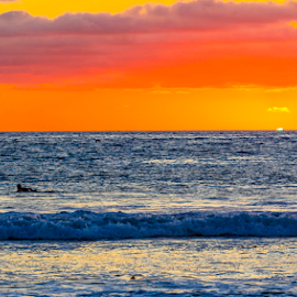 sunset surfing  by Roman Gomez - Sports & Fitness Surfing ( ocean beach, surfend, surfing, sunset )