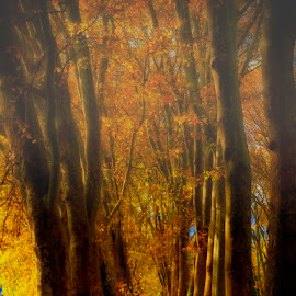 by Paulo Soares - Landscapes Forests ( nature, summer, forest )