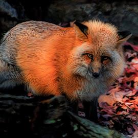 by Steve Arthur - Digital Art Animals
