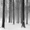 Snowy Forest Live Wallpaper