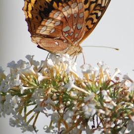 by Lori Depsky - Nature Up Close Gardens & Produce