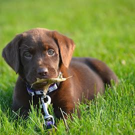 by Sandy Terry-Jones - Animals - Dogs Puppies