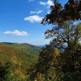 Blue Ridge by Vijay Govender - Landscapes Travel ( pets, trees, landscape )