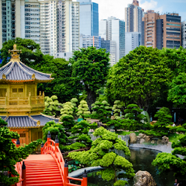 Lone Building by Zi Kuang Moay - City,  Street & Park  Skylines ( temple, hong kong, nan lian garden, buildings, trees, pond )
