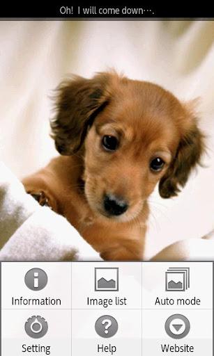 ipiks Love dogs 4 Lite