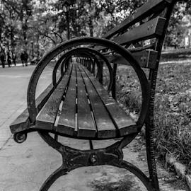 Central Park Bench by Gina Gomez - City,  Street & Park  City Parks ( bench photo, park bench, photo of a park bench, central park bench )