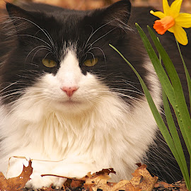 Easter Cat by Russell Frayre - Animals - Cats Portraits ( kitten, cat, easter, color, flower )