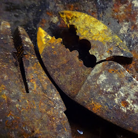 Rusty tools by Judy Dean - Novices Only Macro ( tools, old, pliers, rusty, rust, decay,  )