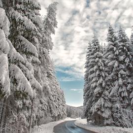 White road by Stanislav Horacek - Landscapes Forests