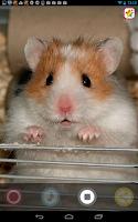 Screenshot of My Talking Pet