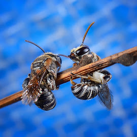 Hai !!! by Zahari Deraman - Animals Insects & Spiders