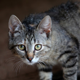 by Foto Tonka - Animals - Cats Kittens