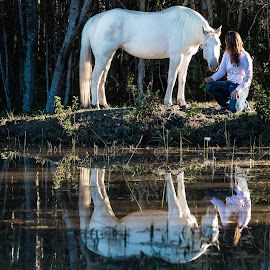 Tanja reflection by Lu Townsend - Animals Horses ( reflection, animals, horses, tanja )