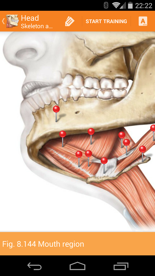 Sobotta Anatomy Atlas Screenshot 3