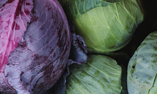 Cabbage wallpapers - screenshot