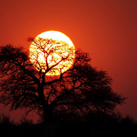 Bleeding sun by Adéle van Schalkwyk - Landscapes Sunsets & Sunrises