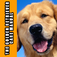 Golden Retriever Care Manual icon