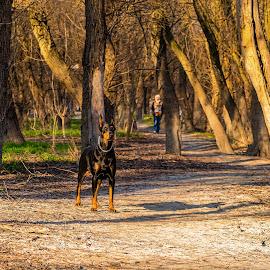 by Zoran Milosavljevic - Animals - Dogs Portraits