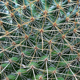 Cactus Criss-cross by Martha van der Westhuizen - Abstract Patterns ( succulent, pattern, prickly, texture, thorns, close-up, cactus )