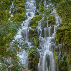 Proxy falls in Oregon by Kathy Dee - Landscapes Forests ( water, oregon, park, green, waterfall, proxy, state, plants, white, cascading, ferns, hiking,  )