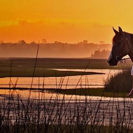 Lowcountry Sunrise by Daniela Snyder - Animals Horses