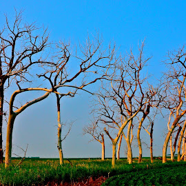 Dead Trees in a Green Field due to flooding in the Midwest by Tyrell Heaton - News & Events Disasters ( field, dead trees, flood, still life, trees )