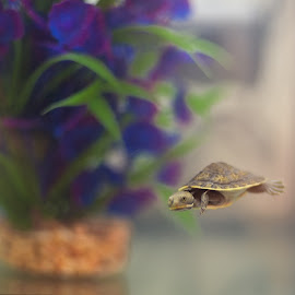 Our new friend 'Shelldon' by Elaine Williamson - Animals Reptiles ( tiny, baby, cute, turtle )