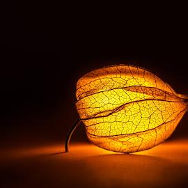 Physalis Glowing by Oguz Cakirci - Food & Drink Fruits & Vegetables ( amazing, fruit, glowing )