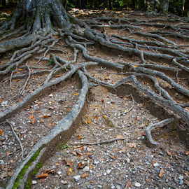 Roots by Stanislav Horacek - Nature Up Close Trees & Bushes