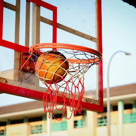 BasketBALL by Carboxylic Tan - Novices Only Sports