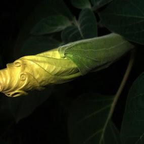 by Pavela Medak - Nature Up Close Flowers - 2011-2013
