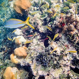 Under The Sea by Shawn Klawitter - Animals Sea Creatures ( carribbean, underwater, outdoors, sea )