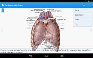 Screenshot of Human Anatomy II Lite