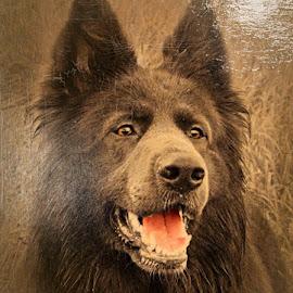 Rangi by Neil Dobinson - Digital Art Animals