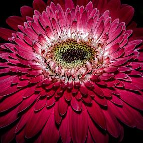 by John Wyne James - Flowers Single Flower (  )